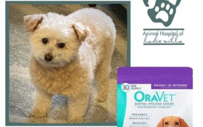 Testimonial: OraVet – It Works!