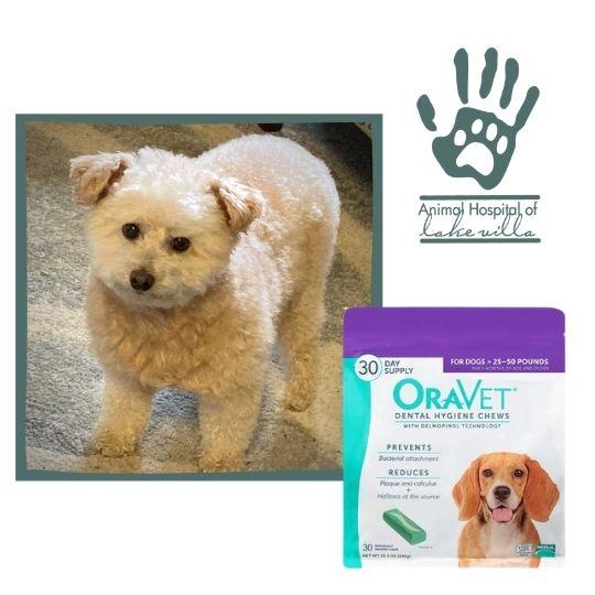 Testimonial: OraVet – It Works!